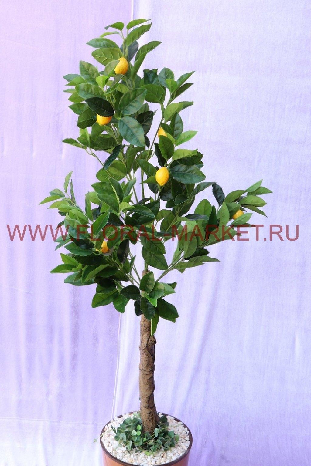 Дерево Лимон малый h=125см.