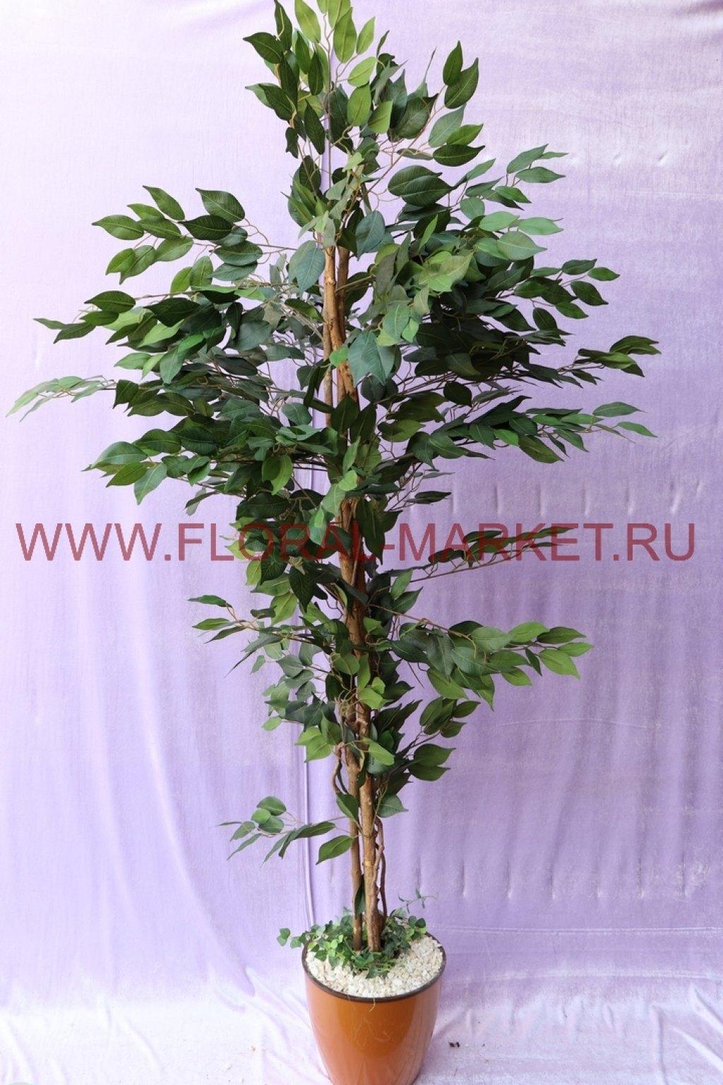 Дерево Фикус зеленый/Бенджамин h=180см.