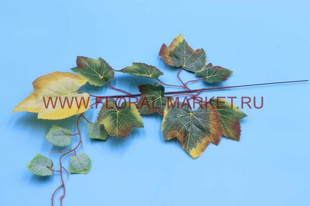 В1584 Ветка дерева винограда