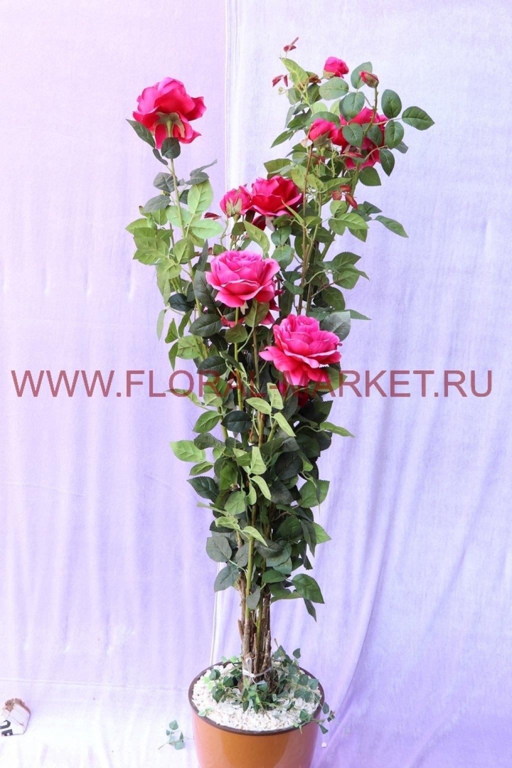 Куст Роза Дебруа h=150см.