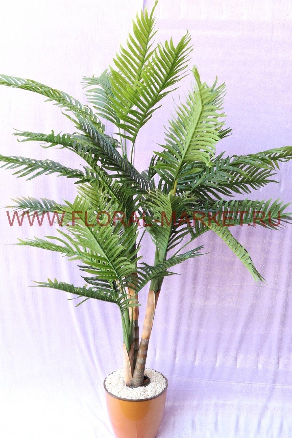 Пальма Финиковая 3 ств.Шантун (нат.ствол,h=180 см)