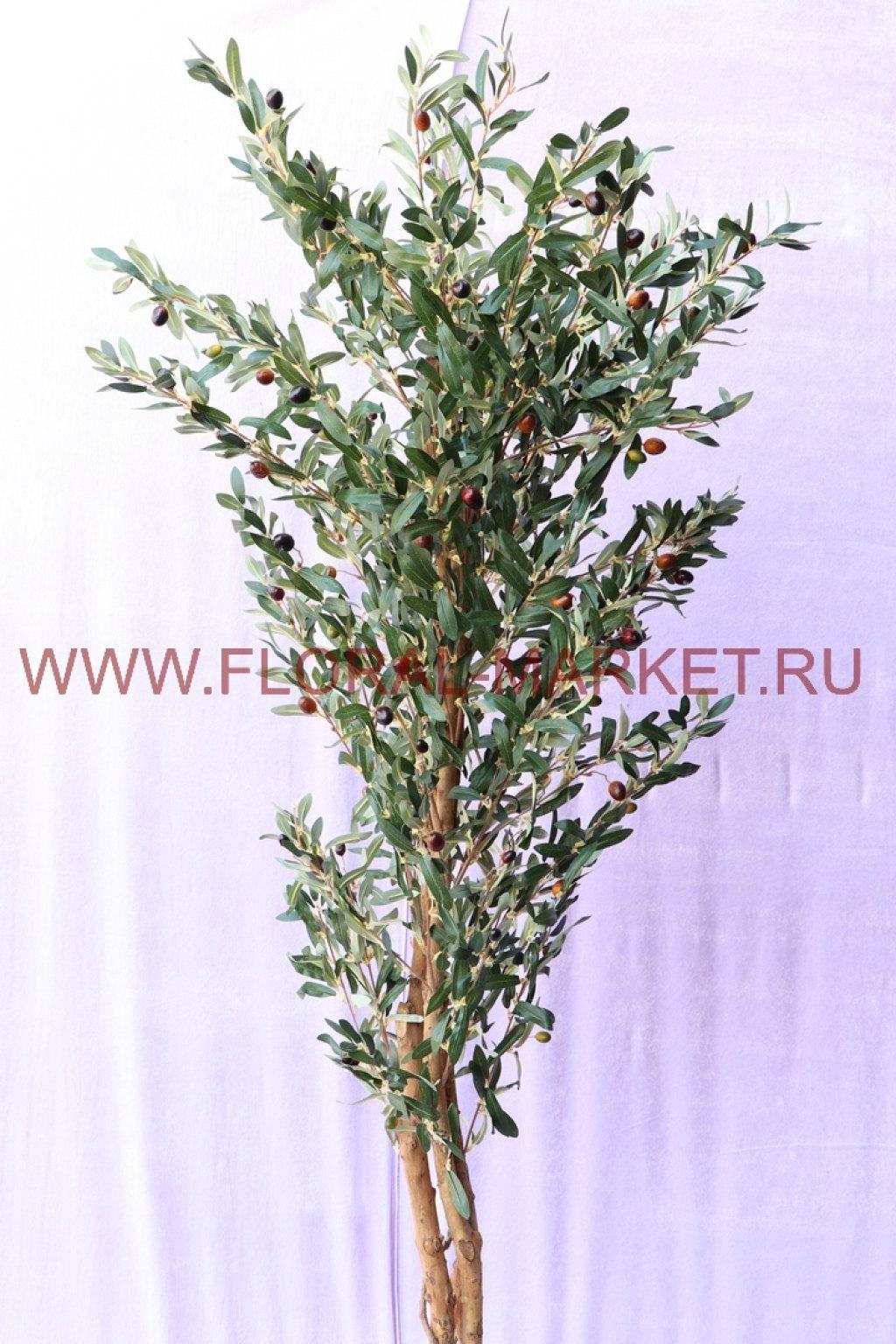 Дерево Олива h=180 см.