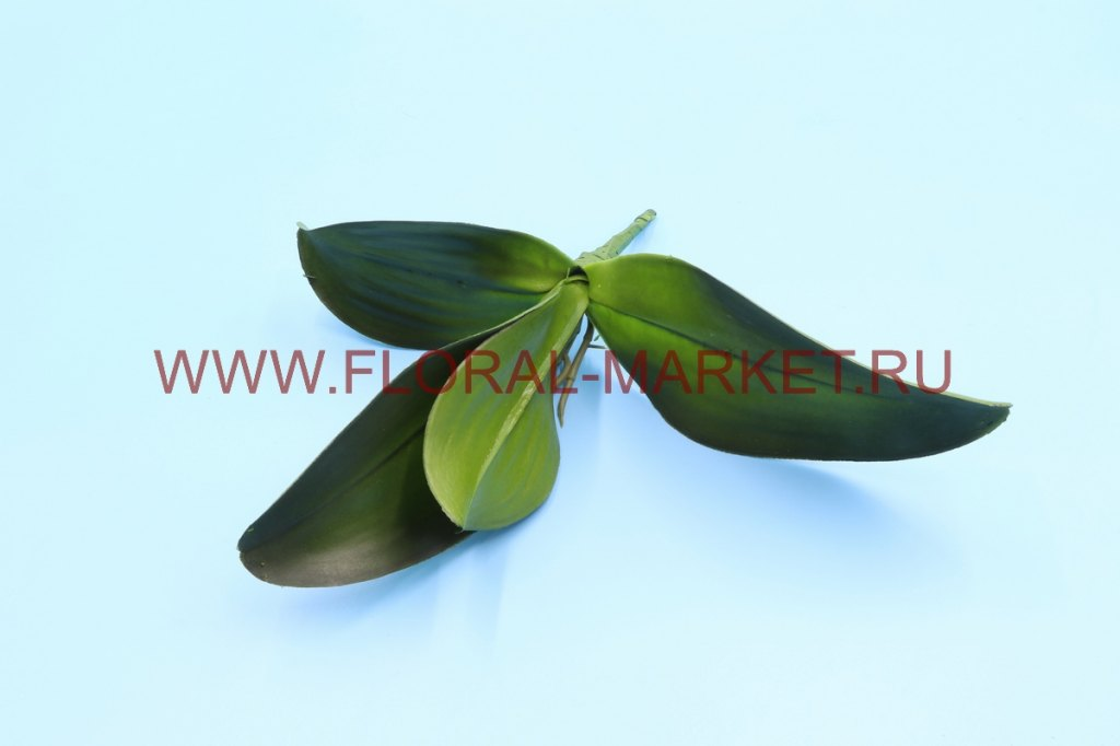 З4745 Лист орхидеи с кореш.5л.h=27см.