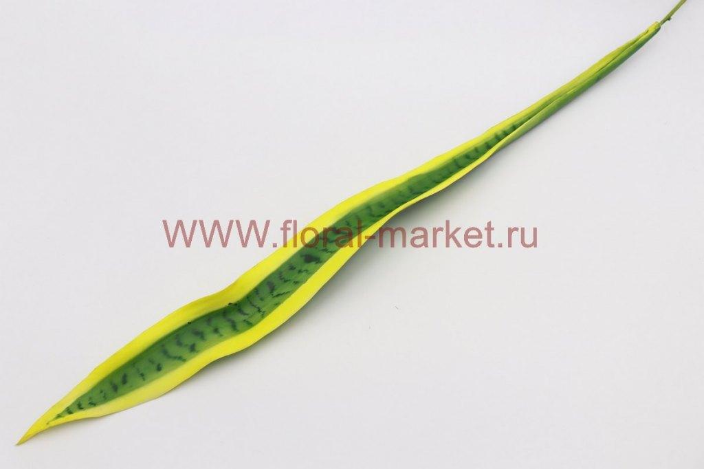 З2349 Лист сансевиерия малая (тещин язык) в.-75см.