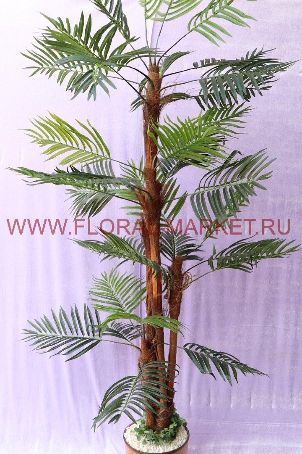 Пальма Финиковая 4 ствола Витязь h=205 см.