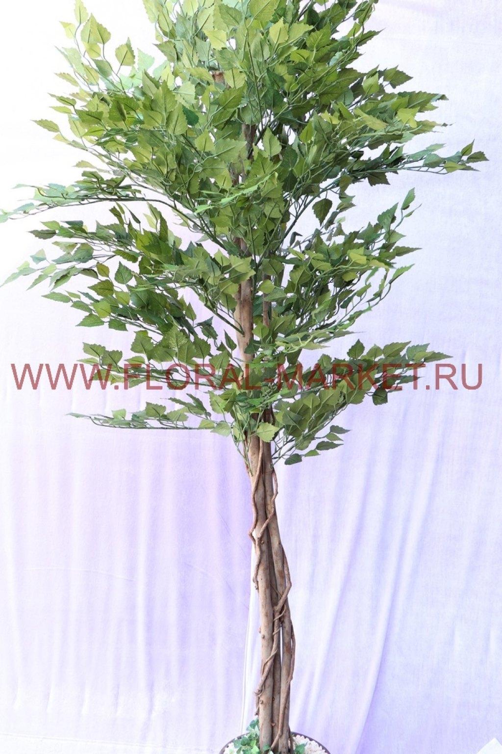 Дерево Береза h=190см.
