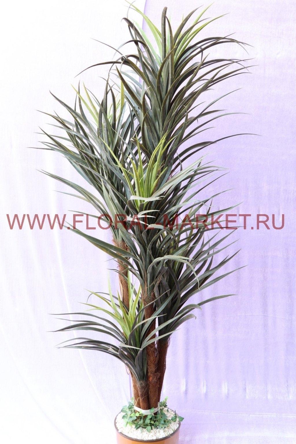 Пальма Юкка 5 голов h=175 см.