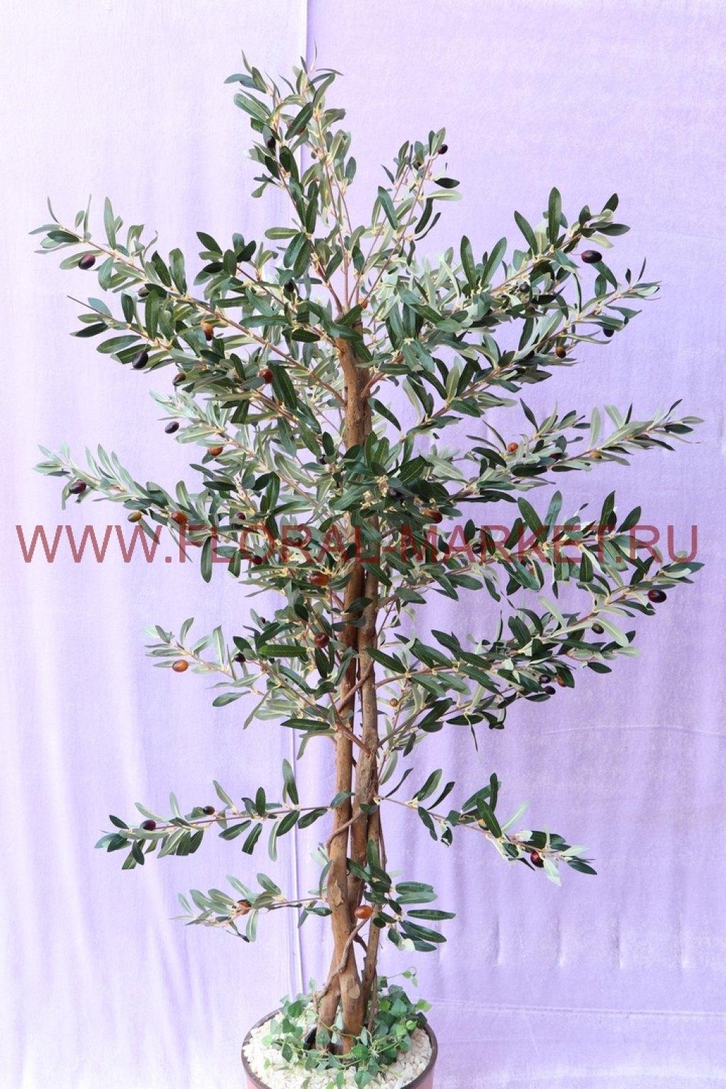Дерево Олива h=150 см.
