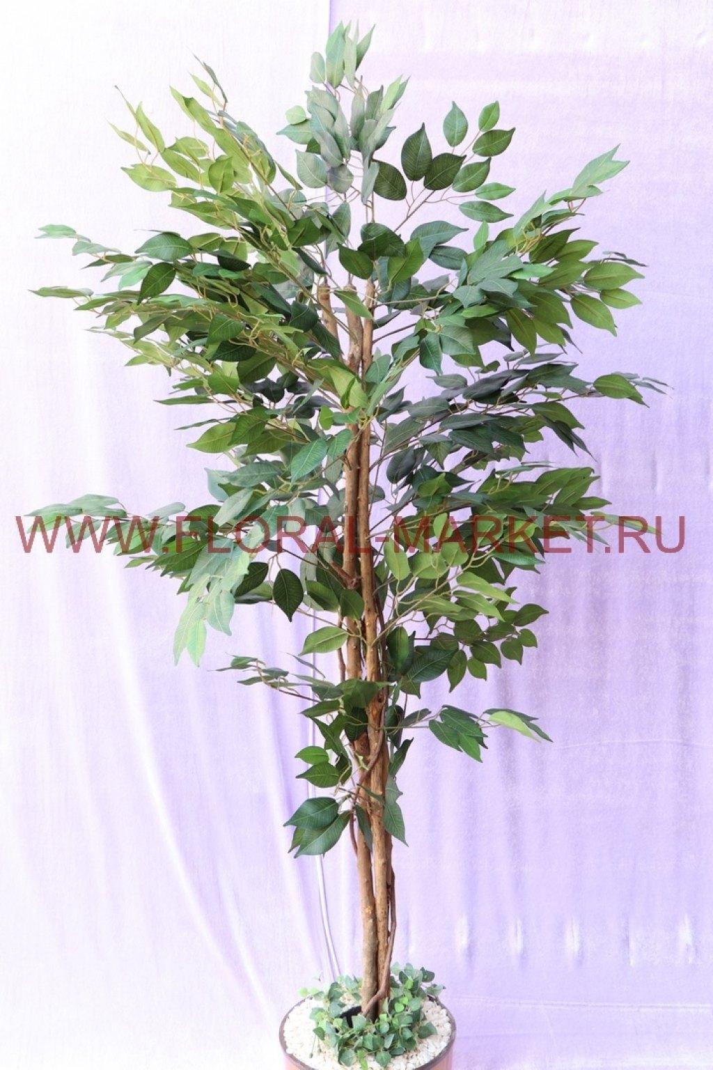 Дерево Фикус зеленый/Бенджамина h=150см.