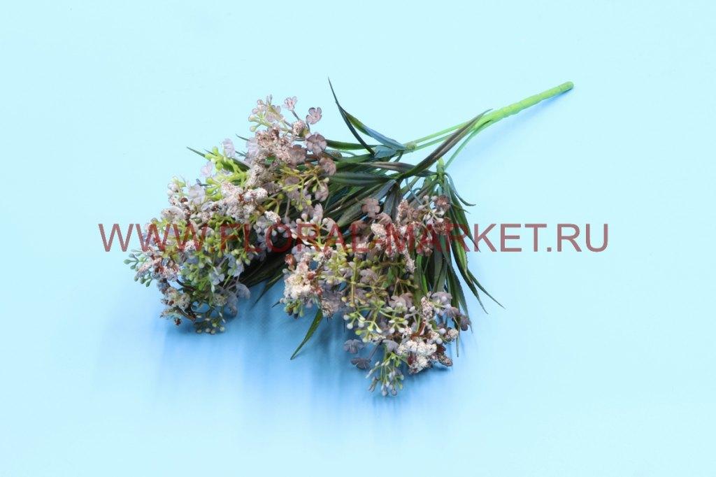 З4723 Куст скимия цветущ. h=30см.